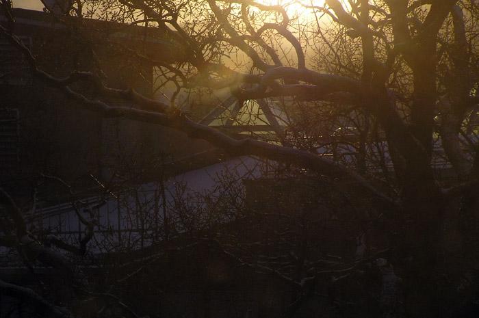 дерево, солнце, 14:30