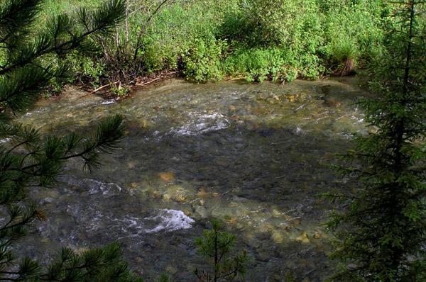 Алтай река