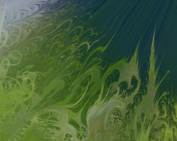 fractal фрактал водоросли
